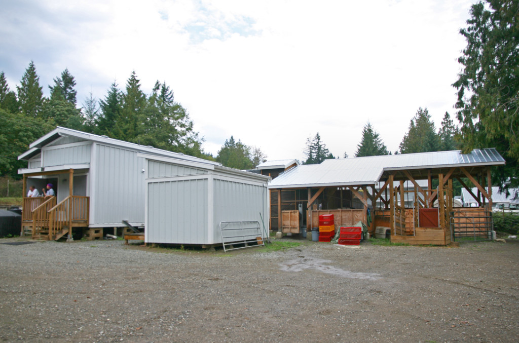 Salt Spring Abattoir