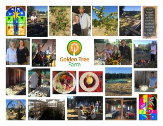 collage Golden Tree 2016
