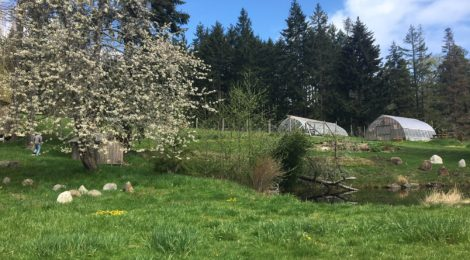 Vegetarian Farm to Table at Salt Spring Seeds